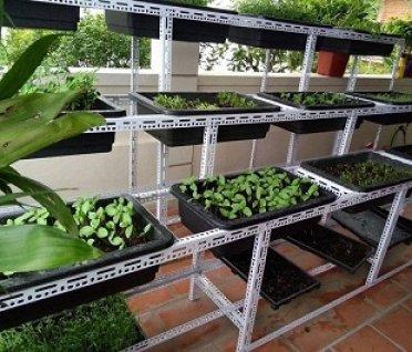 Khay nhựa được sử dụng để trồng rau có an toàn không?